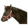 +Nylon foal-halter adjustable red